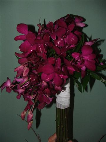 july2011/orchidssmallbetter.jpg